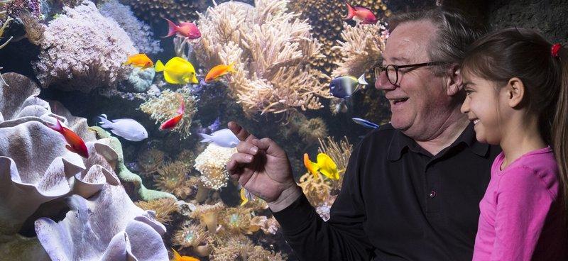 Verlosung: Mit dem VRS in die Unterwasserwelt des SEA LIFE